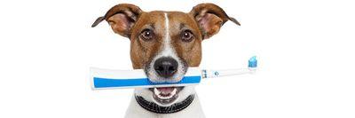 Pet Dental Care at Nature's Alternatives
