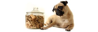 Pet Biscuits & Pet Treats at Nature's Alternatives