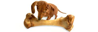 Natural Pet Chews at Nature's Alternatives