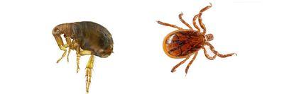 Pet Flea & Tick Products at Nature's Alternatives