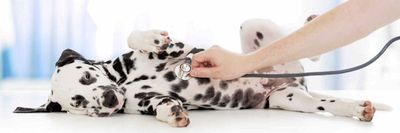 Pet Health Vitamins & Supplements at Nature's Alternatives