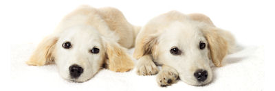 Pet Calming Products at Nature's Alternatives