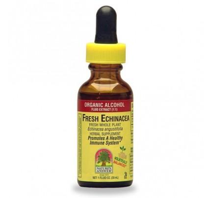 Echinacea Fresh Extract 1oz.