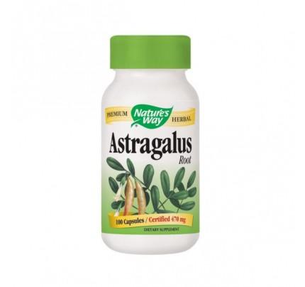 Astragalus Root 470mg 100 Capsules