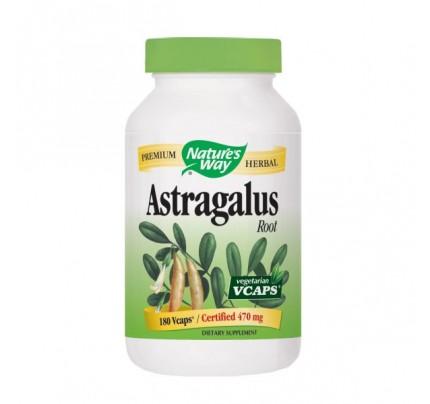 Astralagus Root 470mg 180 Vegetarian Capsules