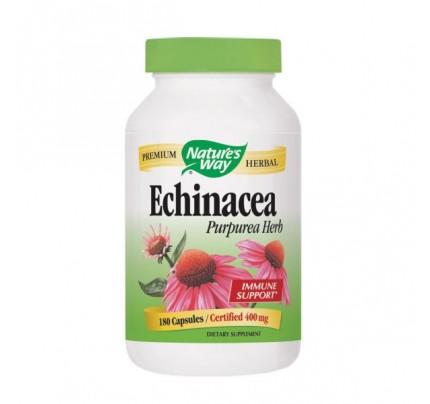Echinacea Purpurea Herb Organic (stem, leaf, flower) 400mg 180 Capsules