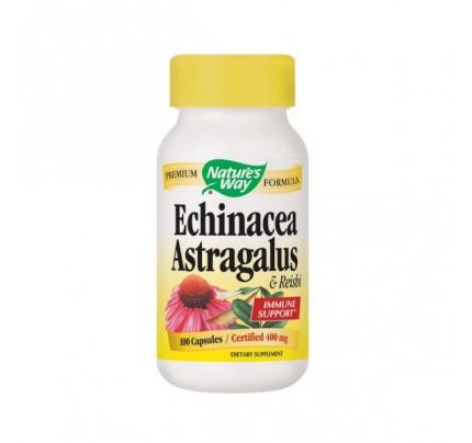 Echinacea, Astragalus & Reishi 400mg 100 Capsules