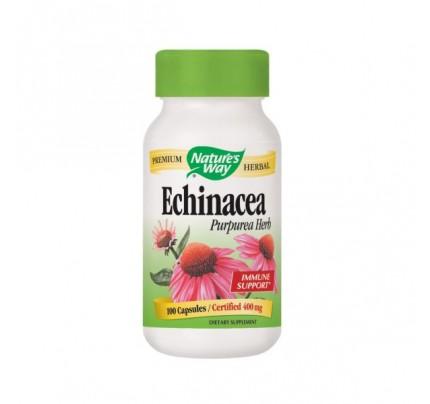 Echinacea Purpurea Herb Organic (stem, leaf, flower) 400mg 100 Capsules