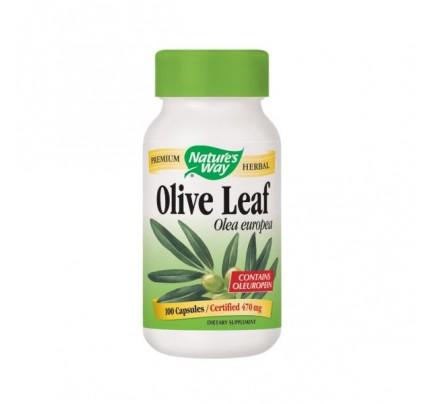 Olive Leaf Olive Leaf Olea europea 500mg 100 Capsules