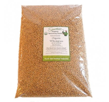 Wheatgrass (Hard Wheat) Organic Sprouting Seeds 5 lb.