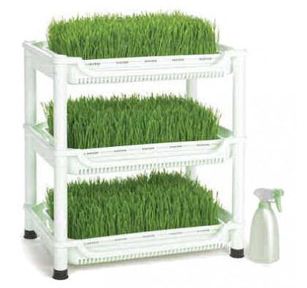 Wheatgrass Grower - Organic Wheatgrass at Home