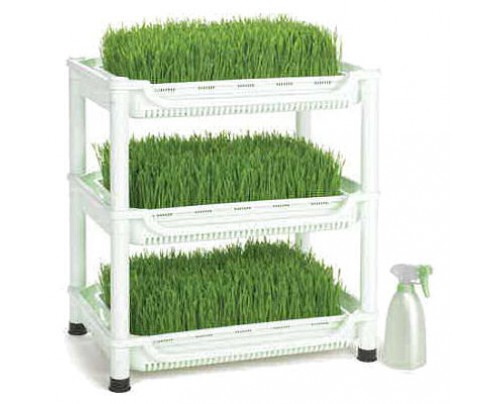 Sproutman Wheatgrass Grower - Organic Wheatgrass at Home